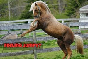 AnimalsFeelingJumpy