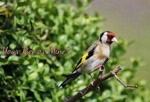 AnimalsYourTreeorMineFinch